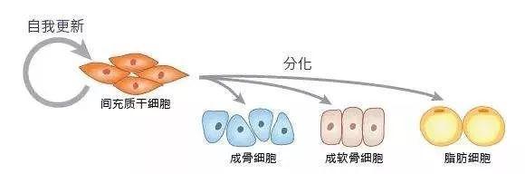 """Nature子刊:NMN居然是可以吃的""""干细胞""""?"""