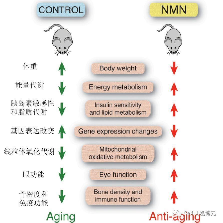 年轻血液能延缓衰老,原因竟然是……