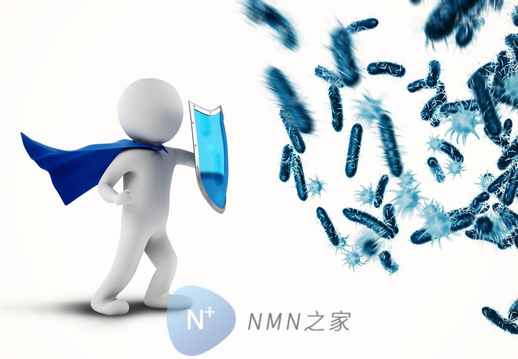 NMN增加人体免疫力